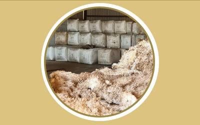 Responsible Wool Standards: Why Suidplaas has no regrets